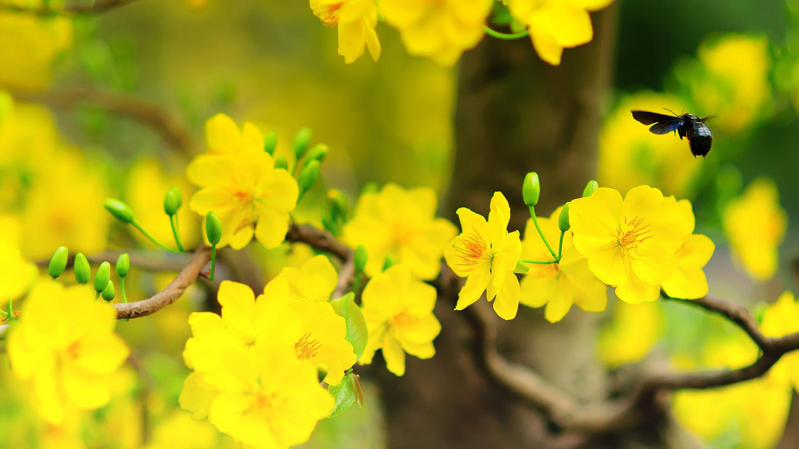 Đời người như đời hoa (Thứ Tư Lễ tro)